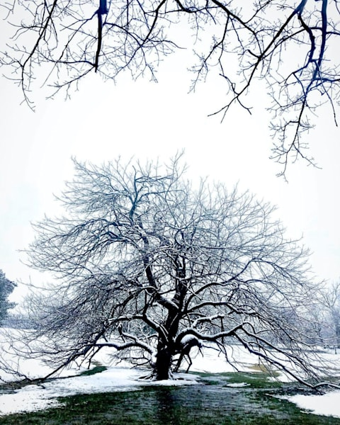 Winter Bendable Tree Photography Art | Lisa Kiene Photography
