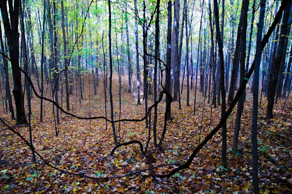 'beaver Pond Woods' Art | Cera Arts