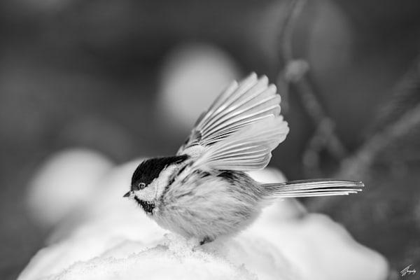 Snow Landing Art | TG Photo