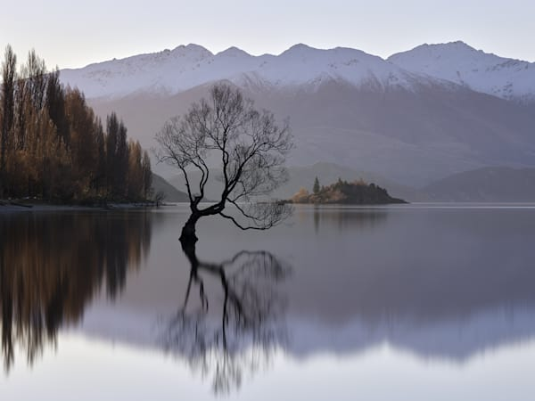 Buy the stunning, limited edition, landscape photograph of the Wanaka Tree in the tranquility of the morning light.