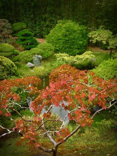Japanese Tea Garden No.1 Art   Patrick Cosgrove Art and Photography