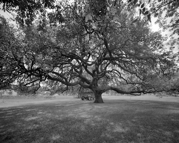 Oak Tree, Frobese House, Cuero, Texas Photography Art | Rick Gardner Photography