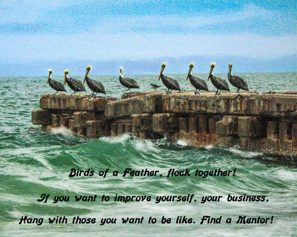 Insp   Pelicans On Wall Photography Art | It's Your World - Enjoy!