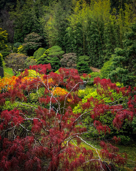 Japanese Tea Garden No.2 Art   Patrick Cosgrove Art and Photography