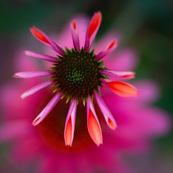 Pink Like A Rawk Star Art | Karen Hutton Fine Art