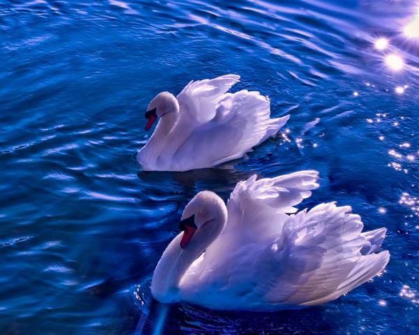 Love Is In The Water Art | Jim Livingston Art