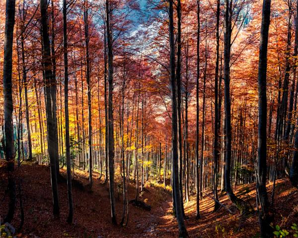 Red Forest Glow Art | Karen Hutton Fine Art