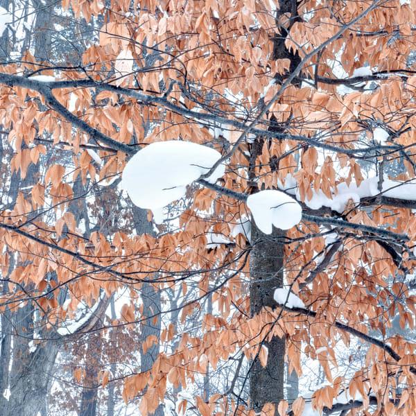 Interlochen Winter Forestscape Photography Art | Gone Wild Wandering
