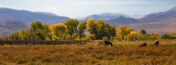 Grazing Horses Photography Art | Leiken Photography