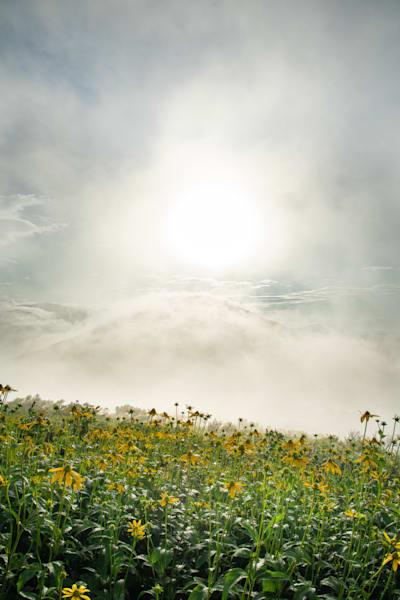 Wildflowers Worship God - Blue Ridge Prints