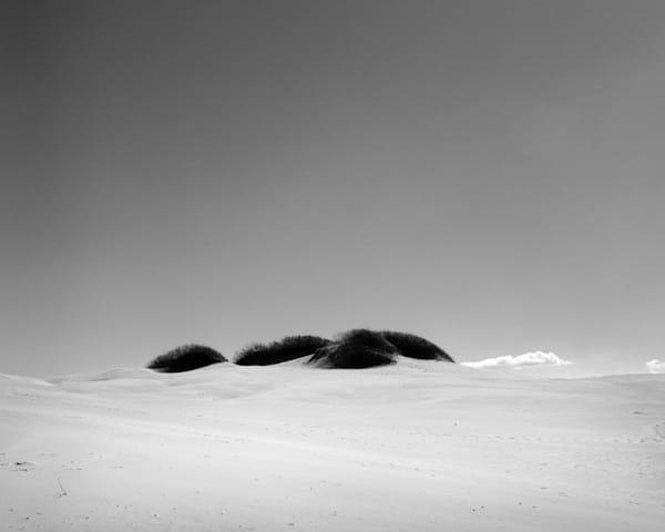 California Landscape Photography - Coastal Sand Dunes-Tonal Study