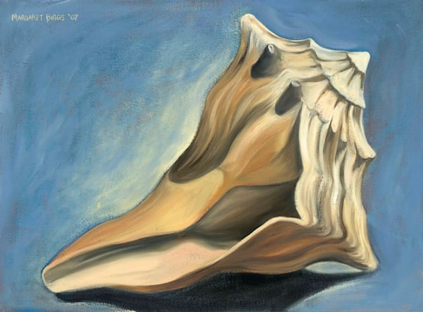 Knobbed Whelk With Shadow Art | Margaret Biggs Fine Art