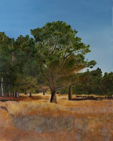 Monterey Pine-Landscape Painting