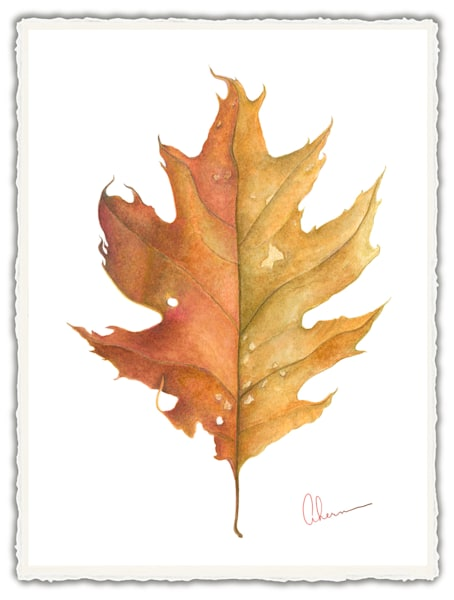 Oak Leaf. Frameable Note Cards by the artist, Mary Ahern
