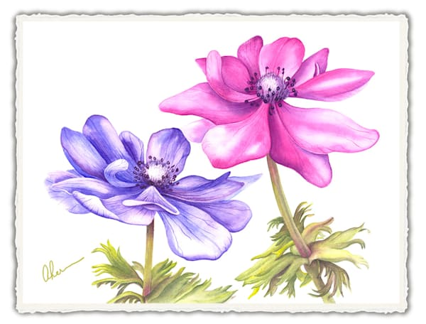 Anemone-A Duet. Frameable Note Cards by the artist, Mary Ahern