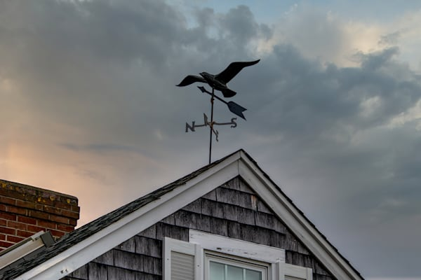 Common Gull Photography Art | The Colors of Chatham