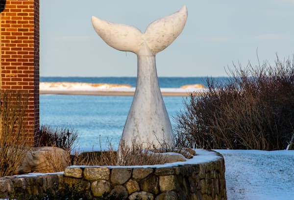 Whale's Tail Photography Art | The Colors of Chatham