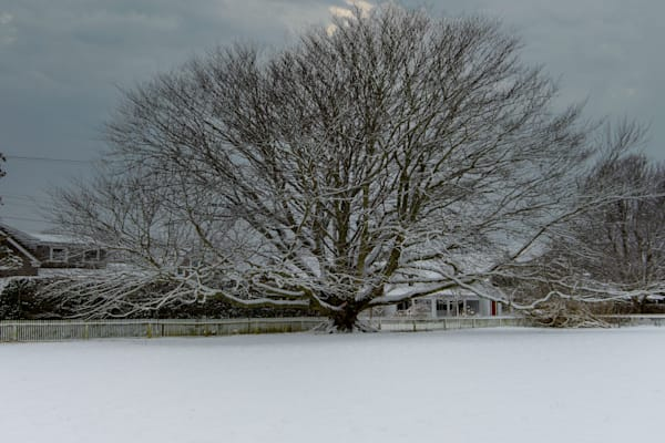 Copper Beech In Winter Photography Art | The Colors of Chatham