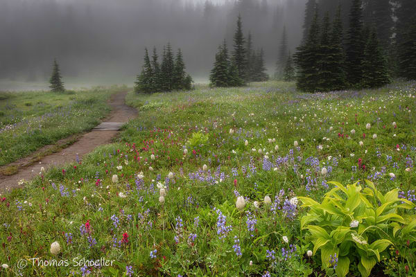 Mt Rainier Wildflower Meadows at Chinook Pass | Mysterious fog shrouds the scene - Prints available for purchase