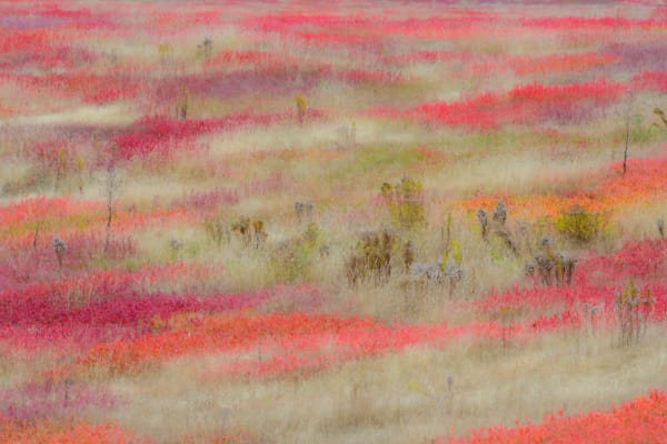 Fields Of Color Art | Full Fathom Five Gallery