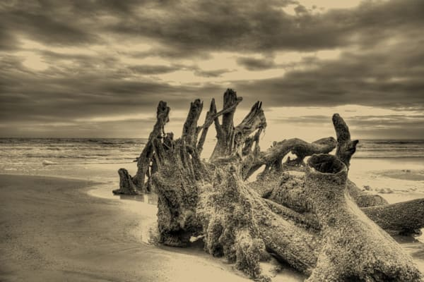 Stormy Morning Gold Metal Photography Art   Willard R Smith Photography