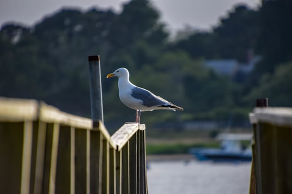 The Lookout Photography Art | The Colors of Chatham