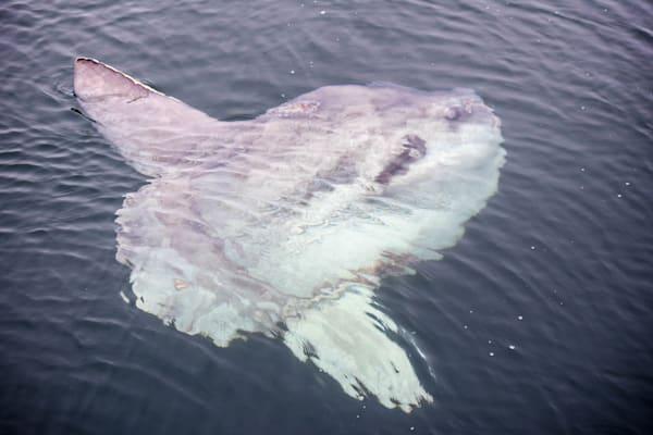 Mola Mola Photography Art | The Colors of Chatham