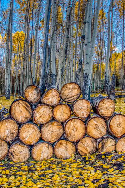 Logs In Fall (Portrait Crop) Photography Art   Peter Batty Photography