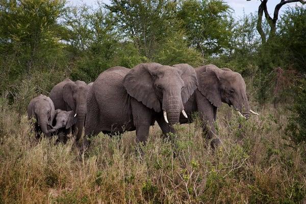 8971 Elephant Family Art | Cunningham Gallery