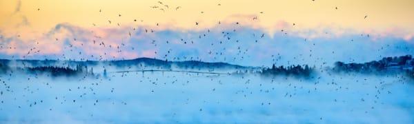 Birds Over Lubec