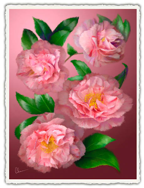 Pink Camellia.  Frameable Note Cards by the artist, Mary Ahern