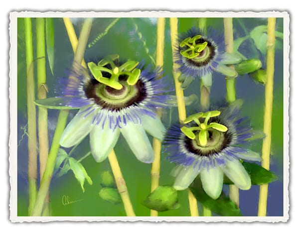 Passion Flower with Bamboo.  Frameable Note Cards by the artist, Mary Ahern