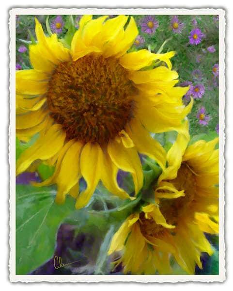 Sunflowers With Purple Asters.  Frameable Note Cards by the artist, Mary Ahern