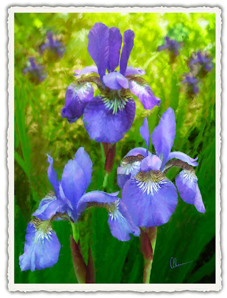 Siberian Iris Trio.  Frameable Note Cards by the artist, Mary Ahern