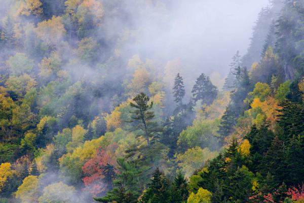 Misty Mountainside Art | Full Fathom Five Gallery