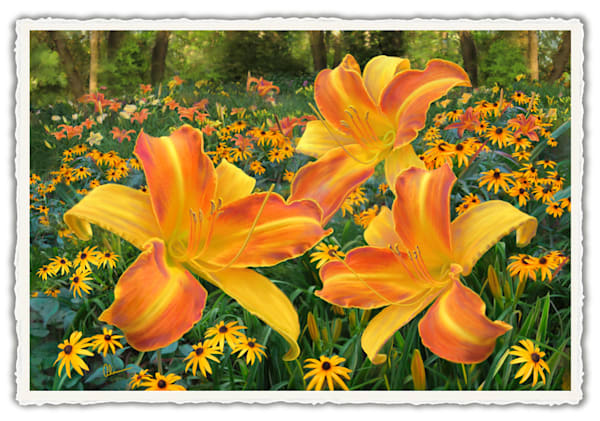 Frans Hals Daylilies With Rudbeckia.  Frameable Note Cards by the artist, Mary Ahern