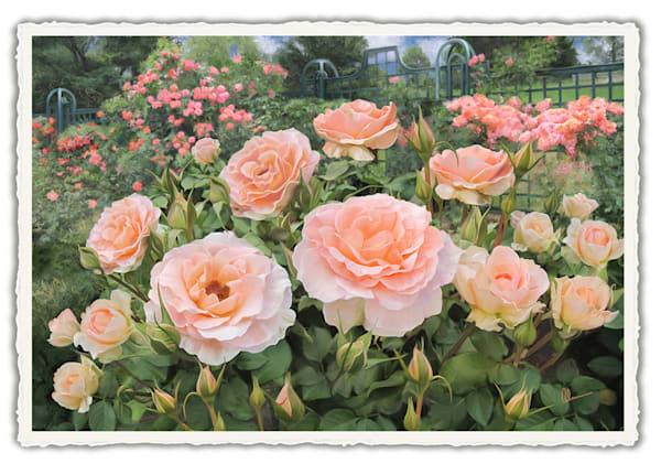 Peggy's Rose Garden. Frameable Note Cards by the artist, Mary Ahern