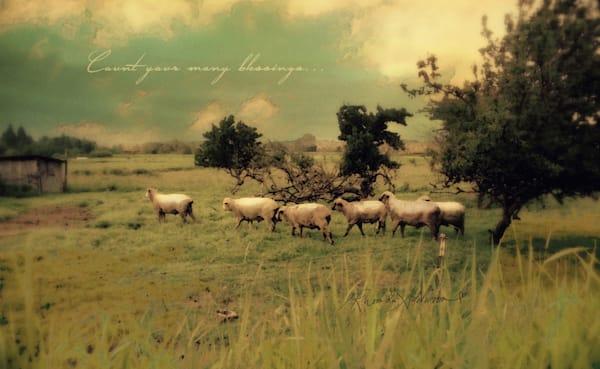 Pastural Sheep