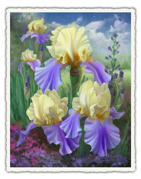 Ellen's Irises.  Frameable Note Cards by the artist, Mary Ahern