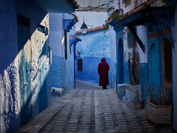 An authentic, limited edition street photograph capturing a prowling cat in Chefchaouen, Morocco.