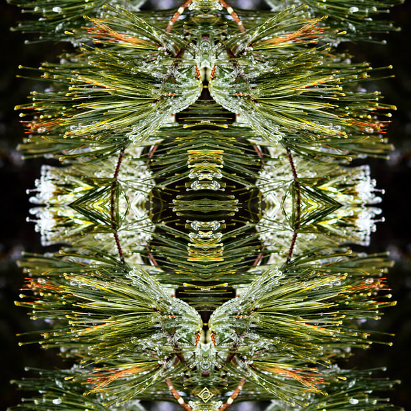 Dazzling Winter Pines Pattern 02
