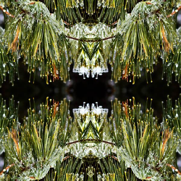 Dazzling Winter Pines Pattern 01