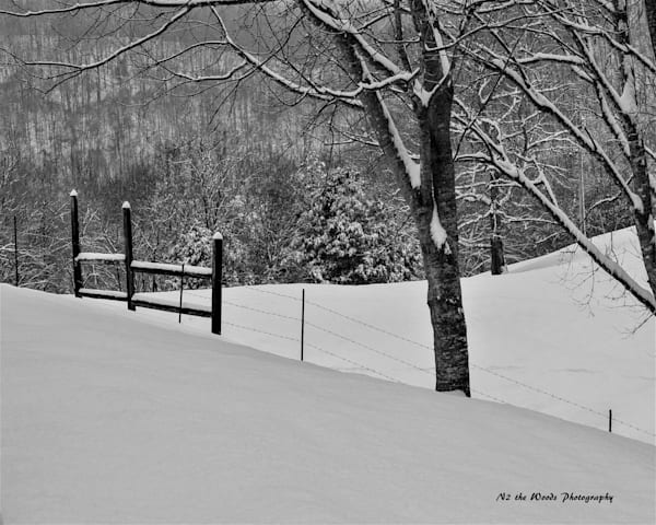 Snow Day Photography Art | N2 the Woods Photography - Nature and Wildlife Artwork