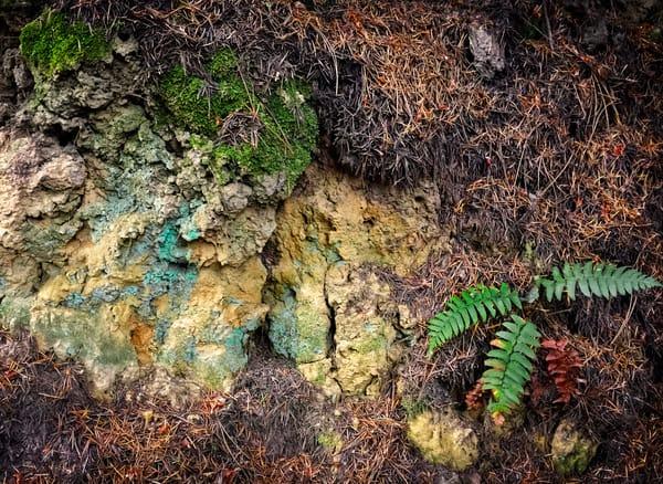 Palomarin Lichen And Fern Art | Patrick Cosgrove Art and Photography