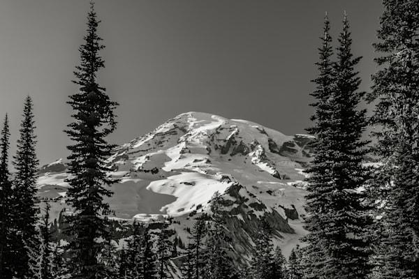 Through the Forest, Mount Rainier, Washington, 2016