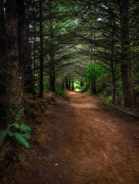 Palomarin Trailhead Path Art | Patrick Cosgrove Art and Photography