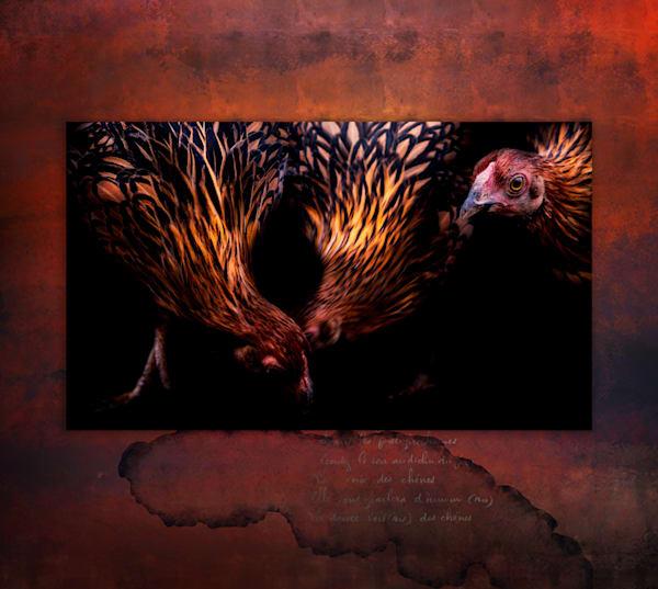 Pecking Order Art | Karen Hutton Fine Art