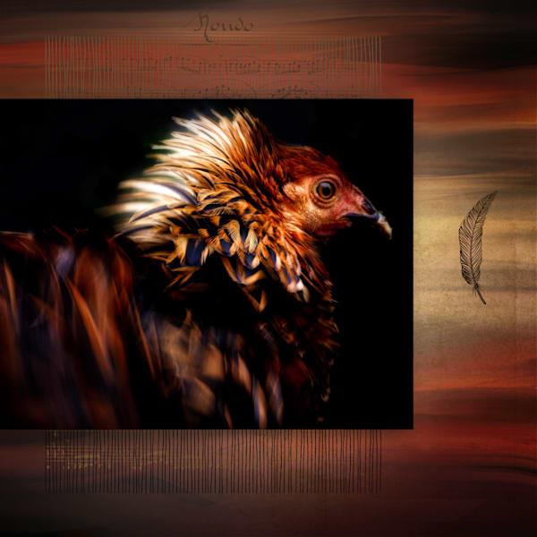 Le Poulet Layla Art | Karen Hutton Fine Art