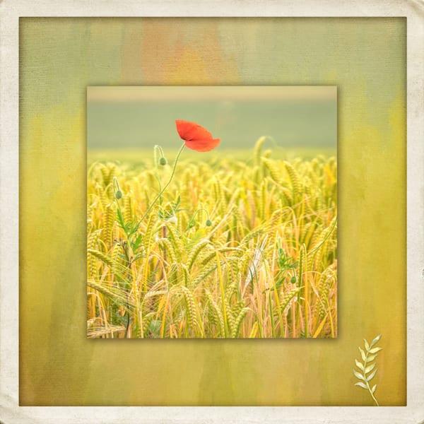 Poppy In A World Of Her Own Art | Karen Hutton Fine Art