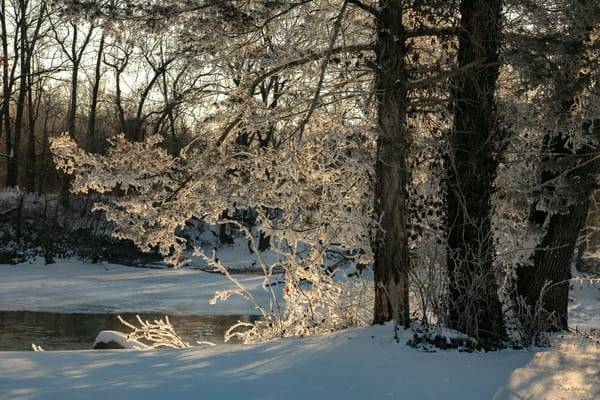 Glowing   Tree Ice On Spring River 3432 Art | Koral Martin Fine Art Photography